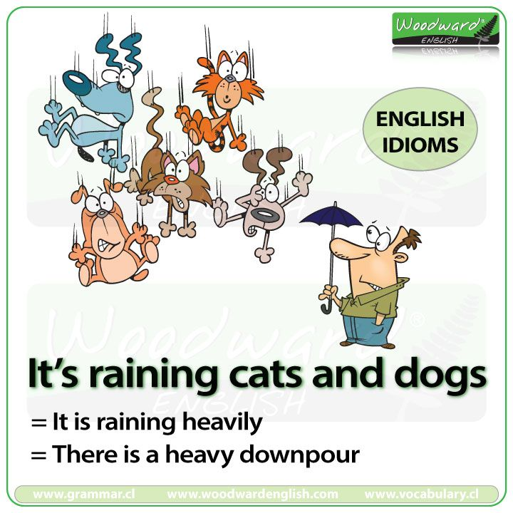Funnies By Pamela Jackson Storer Raining Cats And Dogs Dog Cat