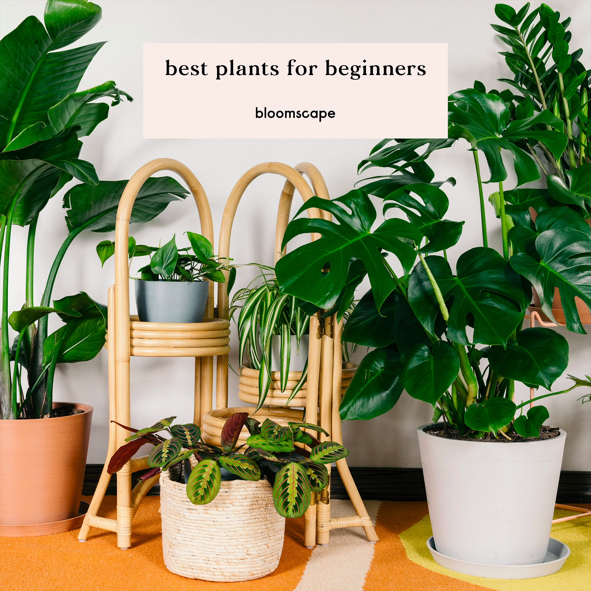 Bring your home to life with easy-to-care-for indoor plants #indoorgarden