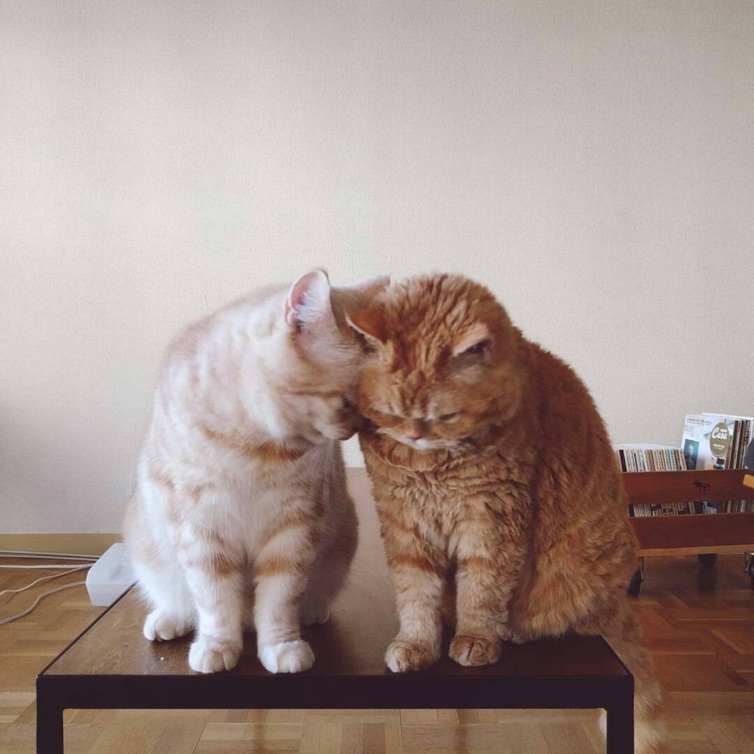 Pinterest Prettyyboyy Pretty Cats Cats And Kittens Funny Animals