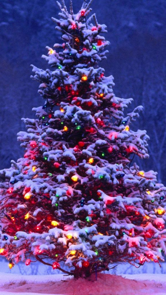 Top 20 Merry Christmas Hd Wallpapers For Smartphones Iphone Android Iphone2lovely Natale All Aperto Alberi Di Natale Decorazioni Di Natale