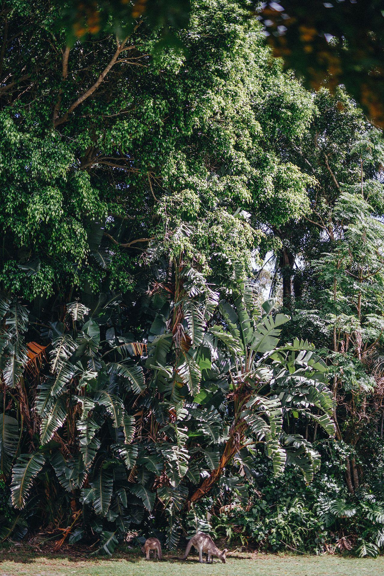 Jungle roos - #AUSTRALIA #Australien #blog #fotografie #kangaroo #kind #landscape #Landschaft #mit #on #photographers #reiseblog #reisen #rocks #south #travel #tumblr #west