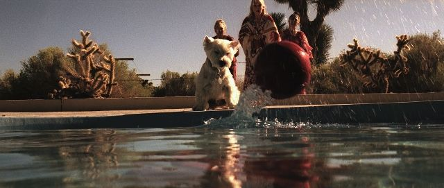 Dog Chasing Red Ball. From Paola Suhonen short Sydän Talven Yksinäiset' #film #redball #puppy