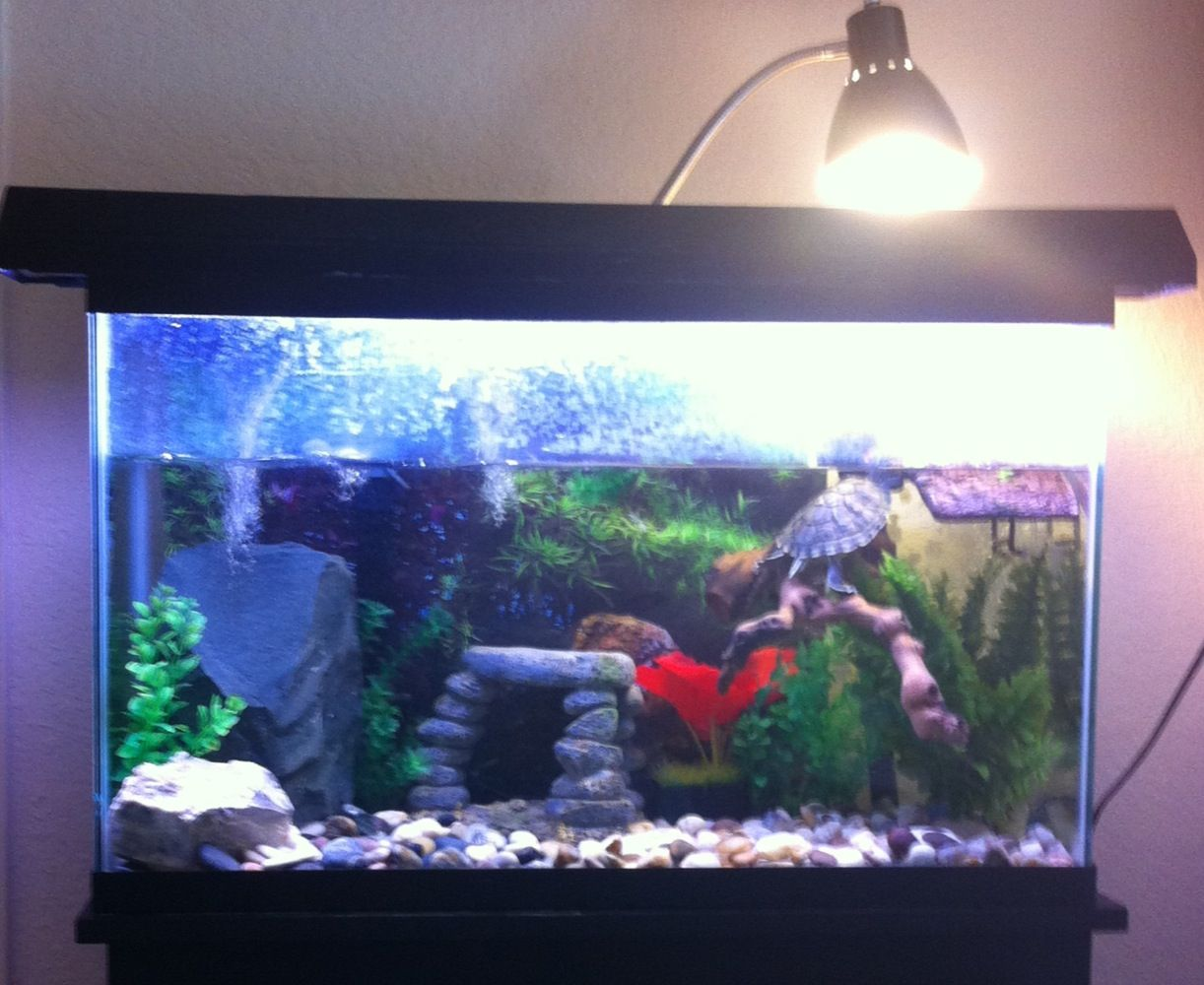 My setup for my 29 gallon tank for my 5 inch female Red