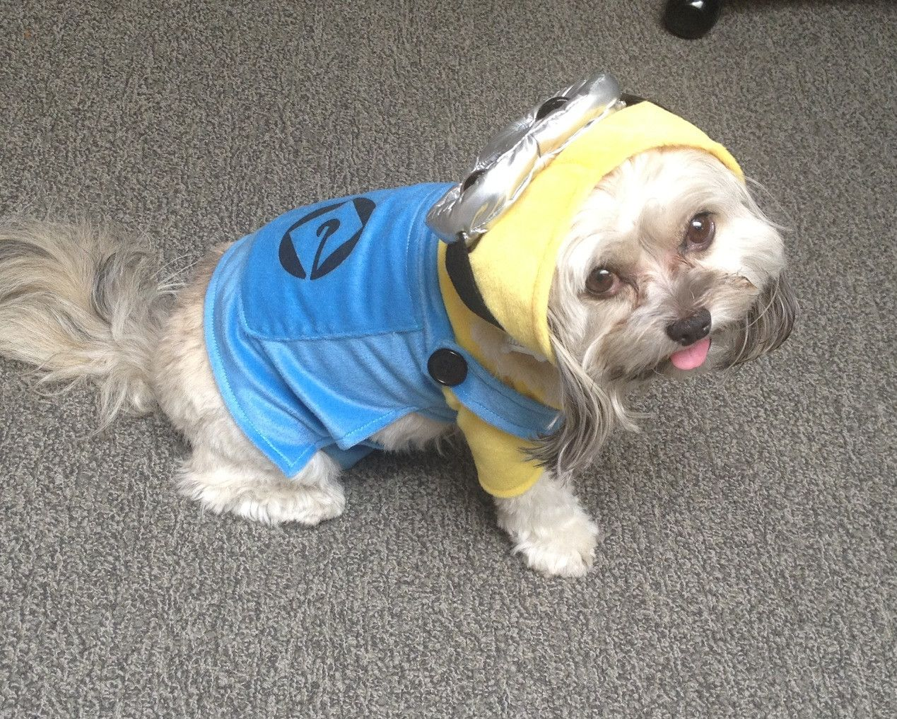 You Best Believe Freedom Will Have This Minion Pet Costume In Time For Halloween In Love 33 Minion Dog Costume Pet Costumes Minion Costumes