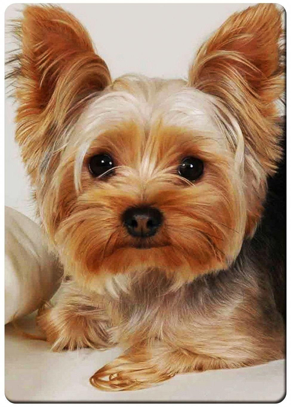 2.95 Yorkshire Terrier Puppy Fridge ebay