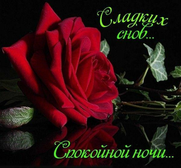 Pin By Sebastian On B N Ru Plants Rose Flowers
