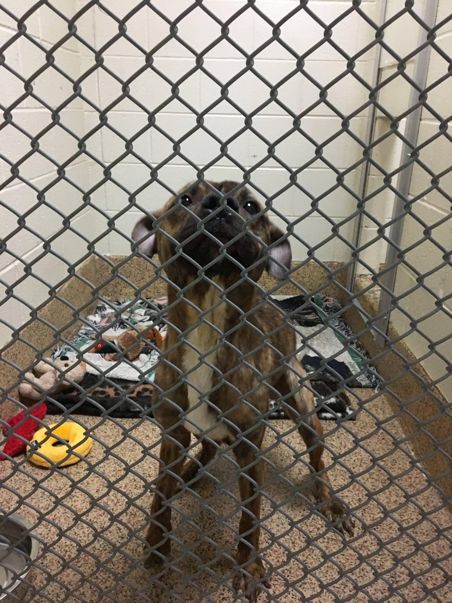 Thomas J. O'Connor Animal Control and Adoption Center Page