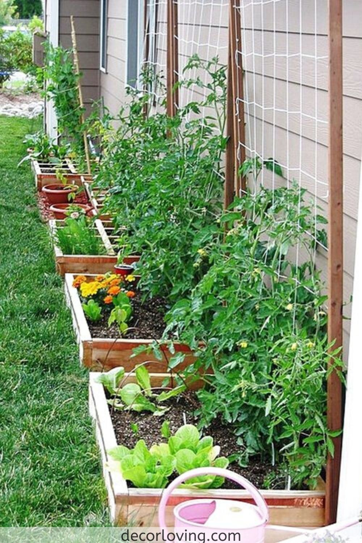 Top 20 Ideas For Vegetable Garden Designs For Backyard Landscaping Small Vegetable Gardens Backyard Vegetable Gardens Garden Layout Vegetable