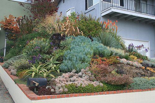 DucoteBarnes Front Garden Slope is part of Succulent Rock garden - Front slope all grown in