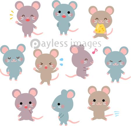 かわいいネズミのいろいろなポーズの写真・イラスト素材