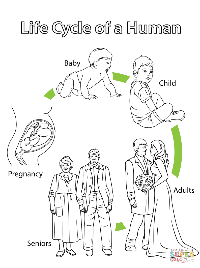 Life Cycle of a Human coloring page from Biology category. Select ...