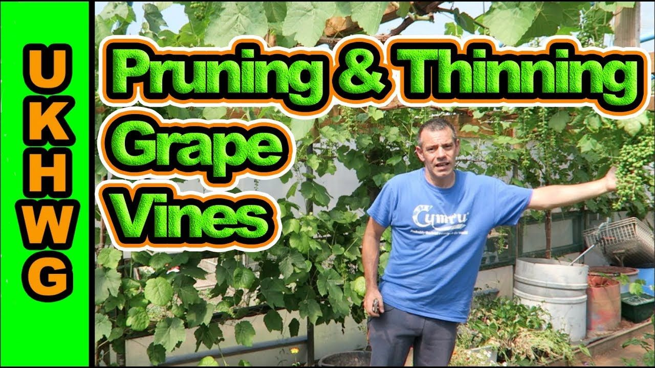 how to store grapes after harvest