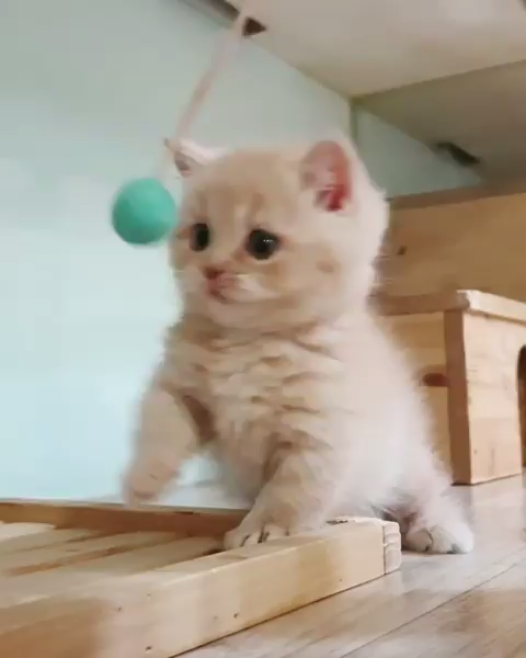 Lovely Lovelycats Cute Cutecats Pets Pet Cats Cat Catsanddogs Love Funny Funnyvideos Cute Baby Cats Cute Cats Cute Cats And Dogs