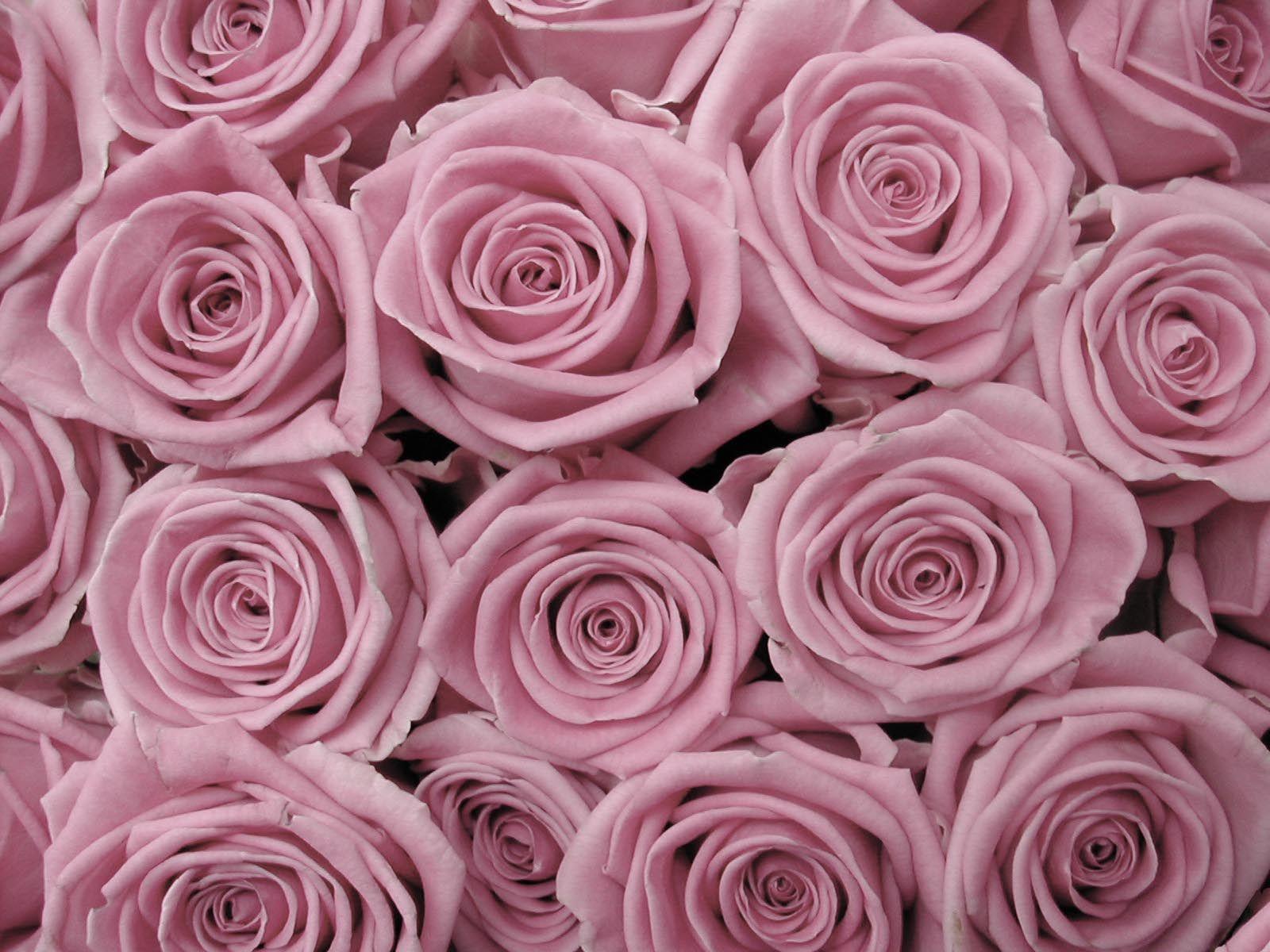 Rose-Background-tumblr-1.jpg (1600×1200) | Roses | Pinterest