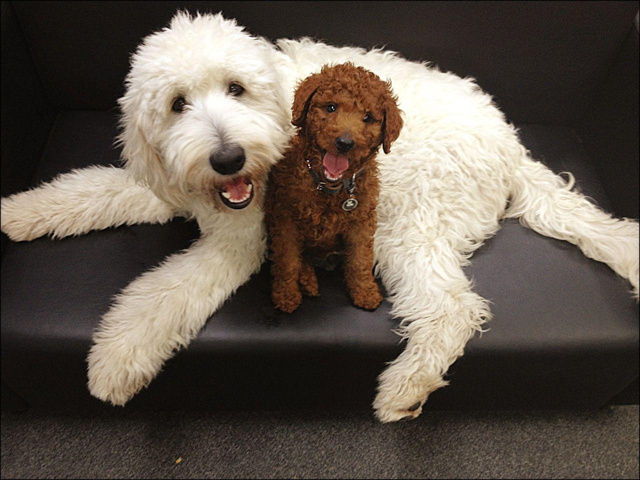 Dogs-Man's Best Friend Essay Sample