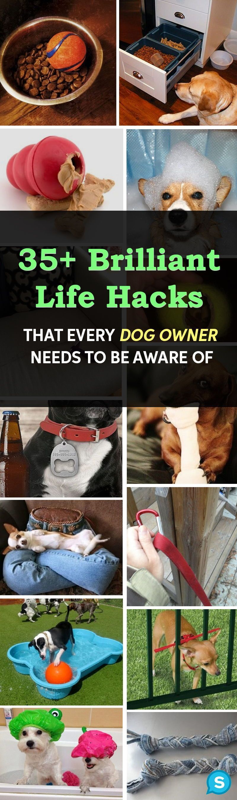 Every dog owner needs to be aware of these genius tips. These dog training tips and tricks will make your life so much easier!  #dogs #pets #animals Spend time training your dog and make your bond stronger. Both you and your dog will be happier when you are both properly trained. doggie | dogs | puppies | dog training | dog breeds | funny dogs | dog food | dog accessories #dogs #doggiemojo #geniusmomtricks Every dog owner needs to be aware of these genius tips. These dog training tips and tricks #geniusmomtricks