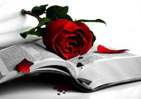Black And White Desktop Nexus Wallpapers Black And White Books Red Roses Rose Wallpaper