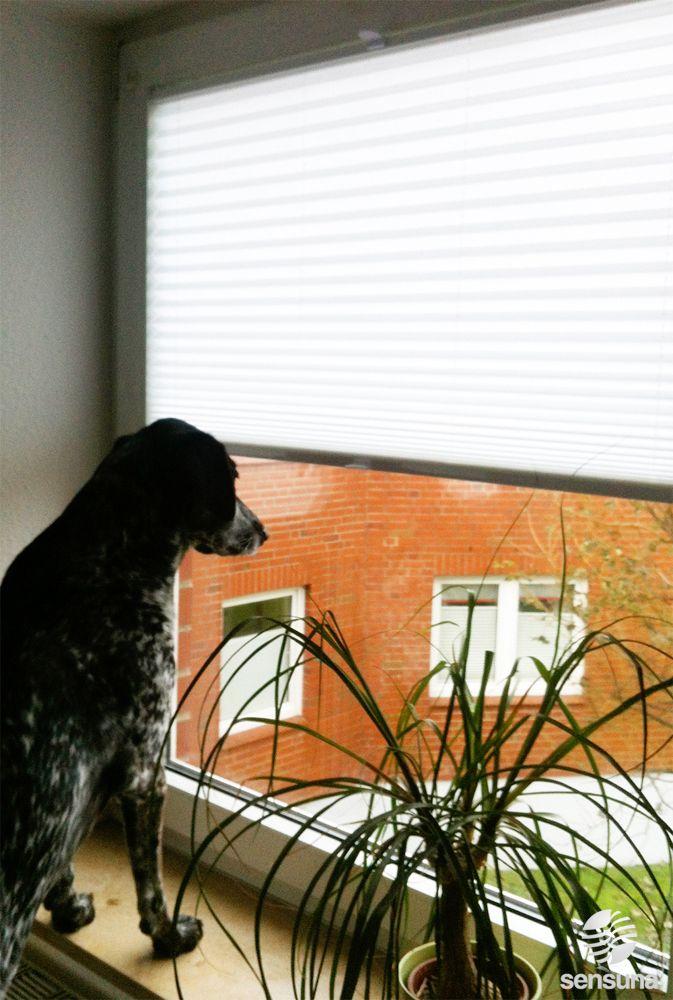 Plissee hoch, Blick nach draußen =) Fenster Plissee von