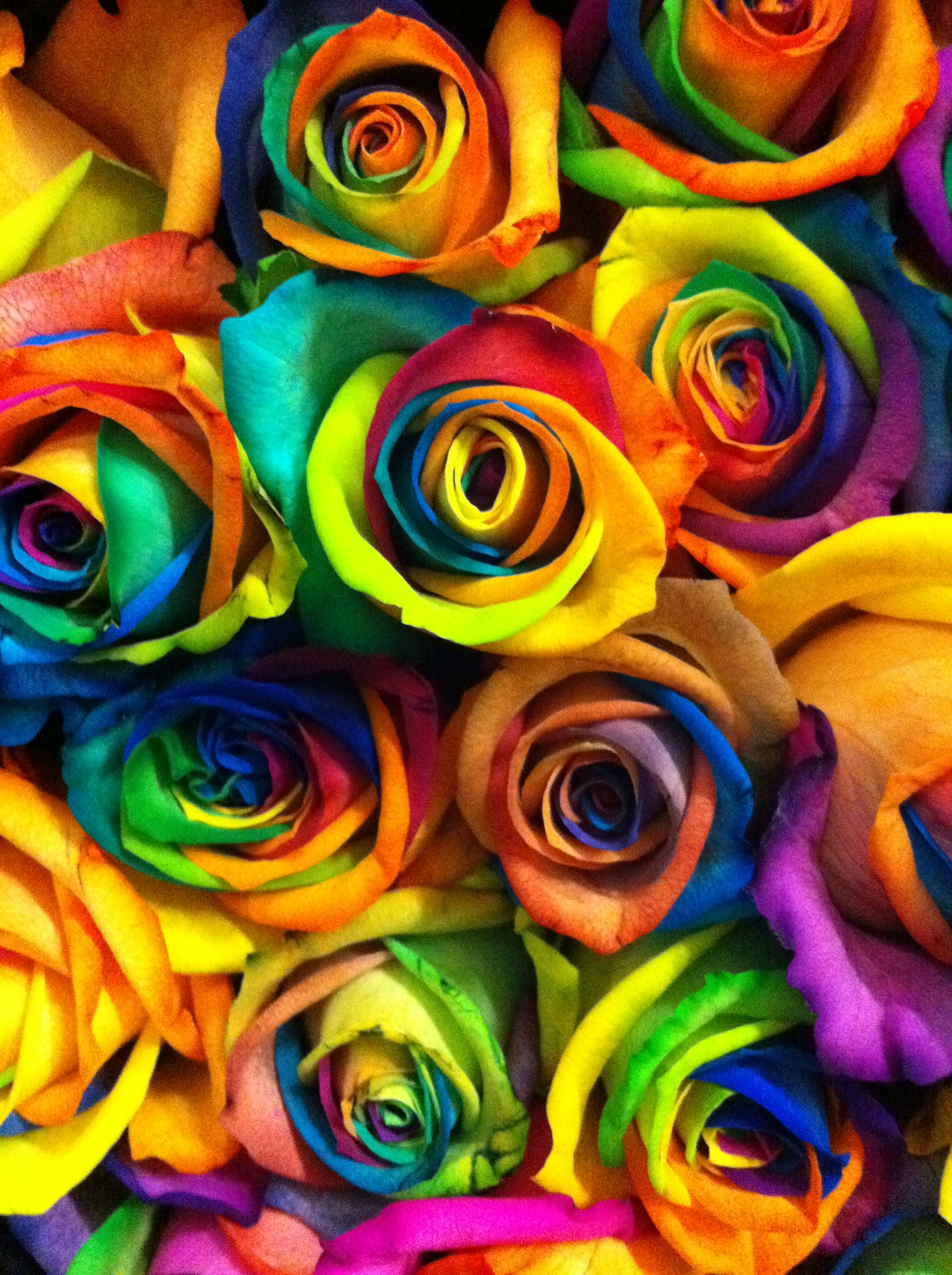 Rainbow Flower Rose Art Iphone 7 Wallpapers Rainbow Roses