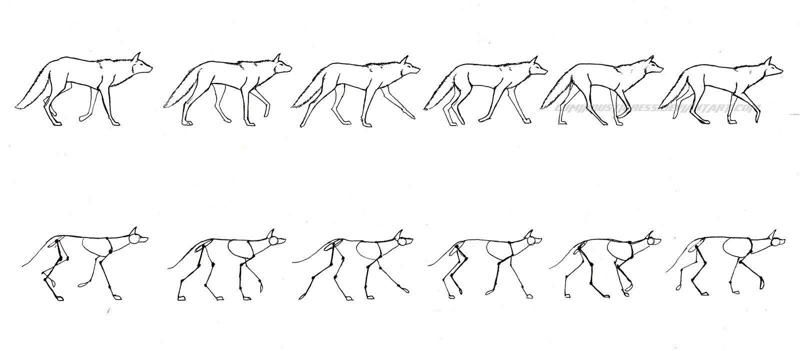 Wolf Walking Cycle By Luminoustigress On Deviantart Art Of