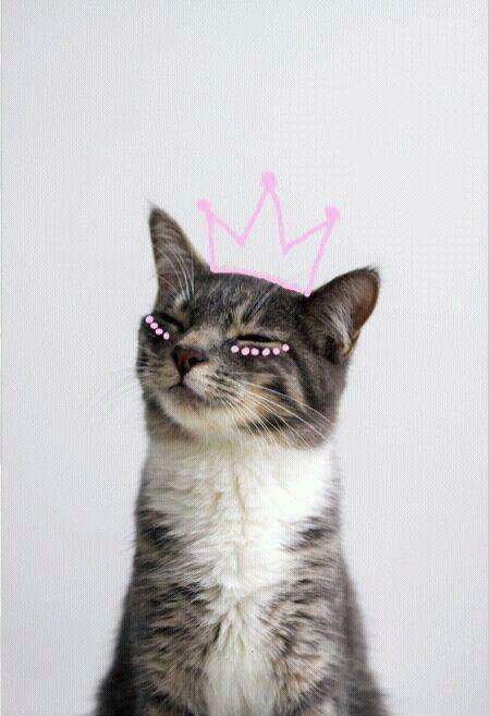 IPhone Wallpapers (Simple Funny Cat Wallpaper) | Phone Wallpapers. |  Pinterest | Funny Cat Wallpaper, Cat Wallpaper And Wallpaper