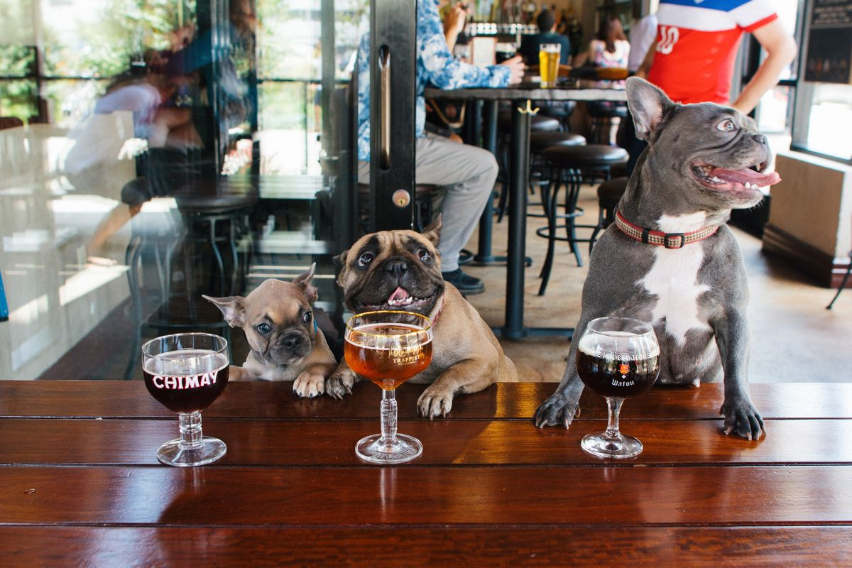 Try These Dog Friendly Restaurants In The Space Coast Area Of Florida That Let Your Pup Tag Along Dogfr Dog Friends Dog Friendly Vacation Dog Friendly Hotels