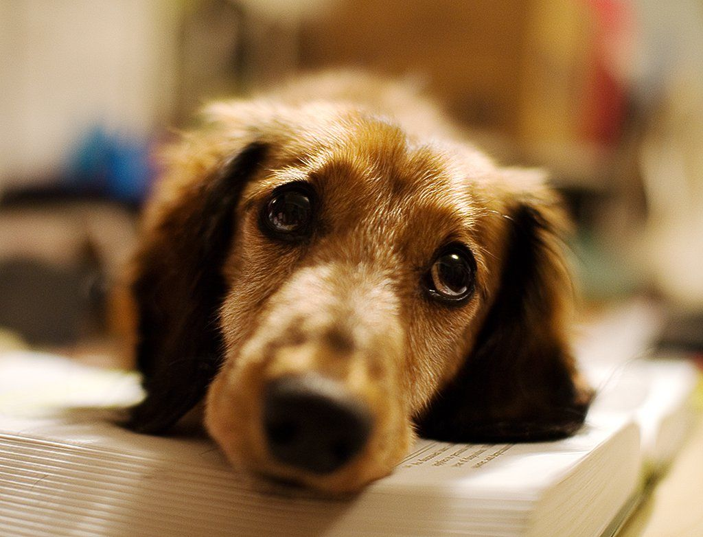 Can Dogs Tell Time? This Week's Dog Science Review Dogs