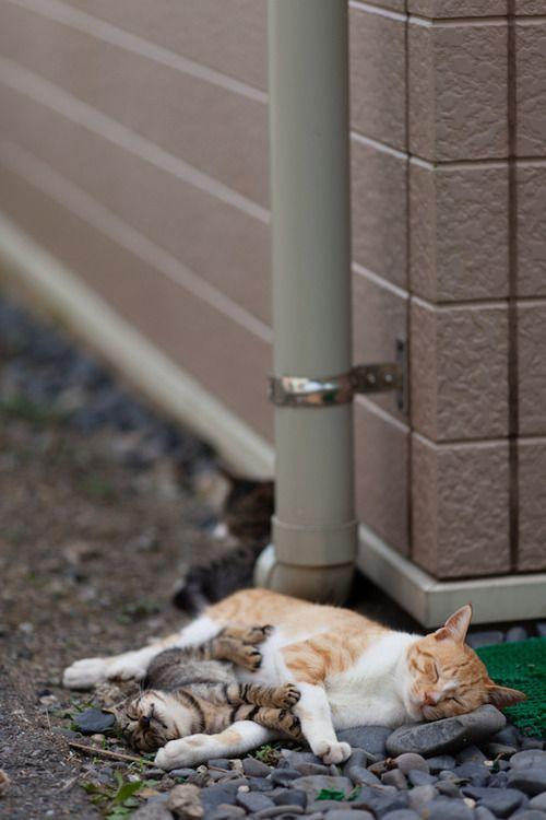 Afternoon Nap Animals Pinterest Perro Gato Gatos And Gatos Cats