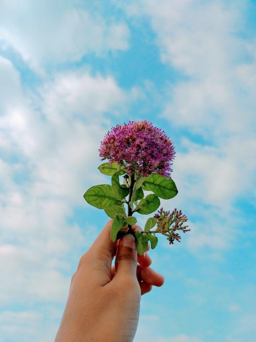 Pin Oleh Khania Di Bunga Gambar Bunga Bunga Mawar Merah