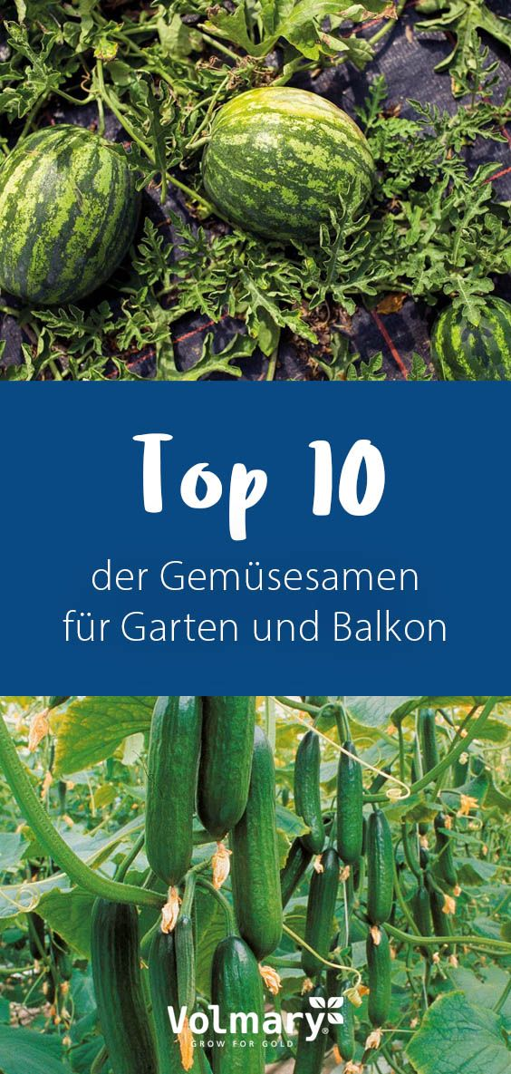 Photo of Grow vegetables in your own garden