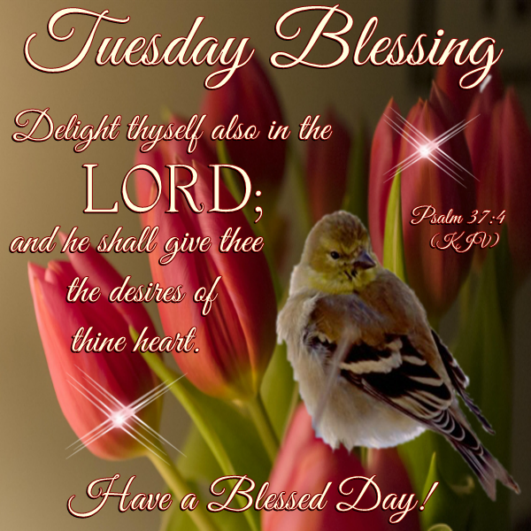 Good Morning Tuesday Messages : Good morning happy tuesday i pray that you have a safe