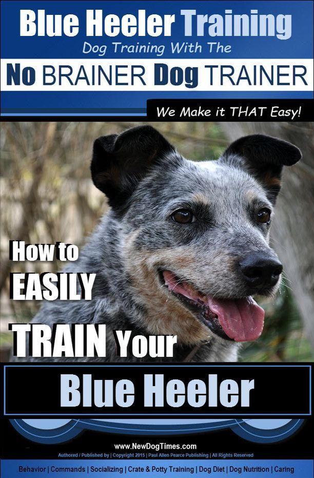 Blue Heeler Training Guide Help Begins With The Car Ride Home