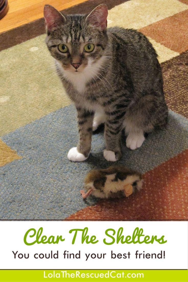 Fort Worth Pet Adoption Events