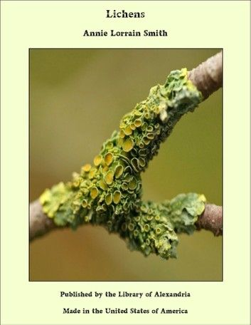 Photo of Lichens