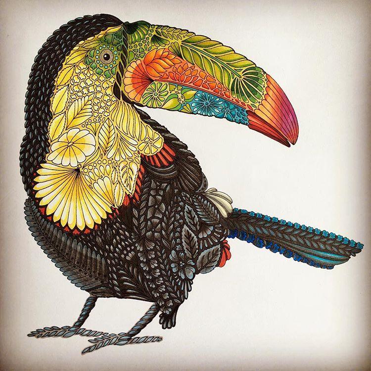 Coloring Toucan Birds MillieMarotta Milliemarotta Milliemarottabooks