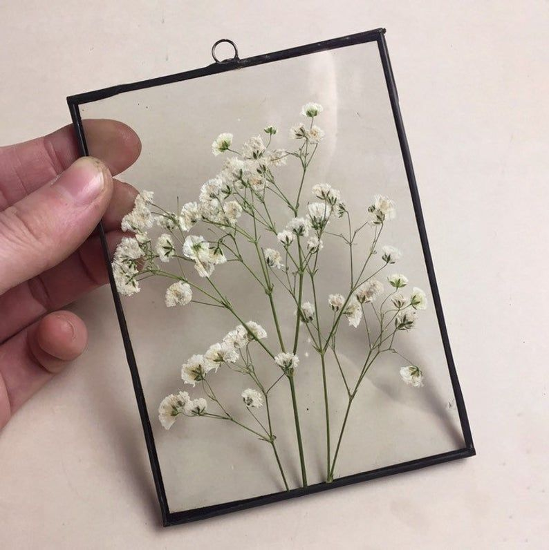 Herbarium With Dried Baby S Breath Flowers Mother Gift Etsy Pressed Flowers Flower Frame Babys Breath Flowers