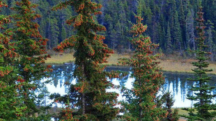 Upside-down Tree Lake