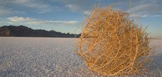 Image result for tumbleweed rolling