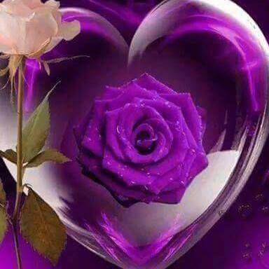 Pin de Annette Edwards en Purple Passion Pinterest Flor - rosas y corazones