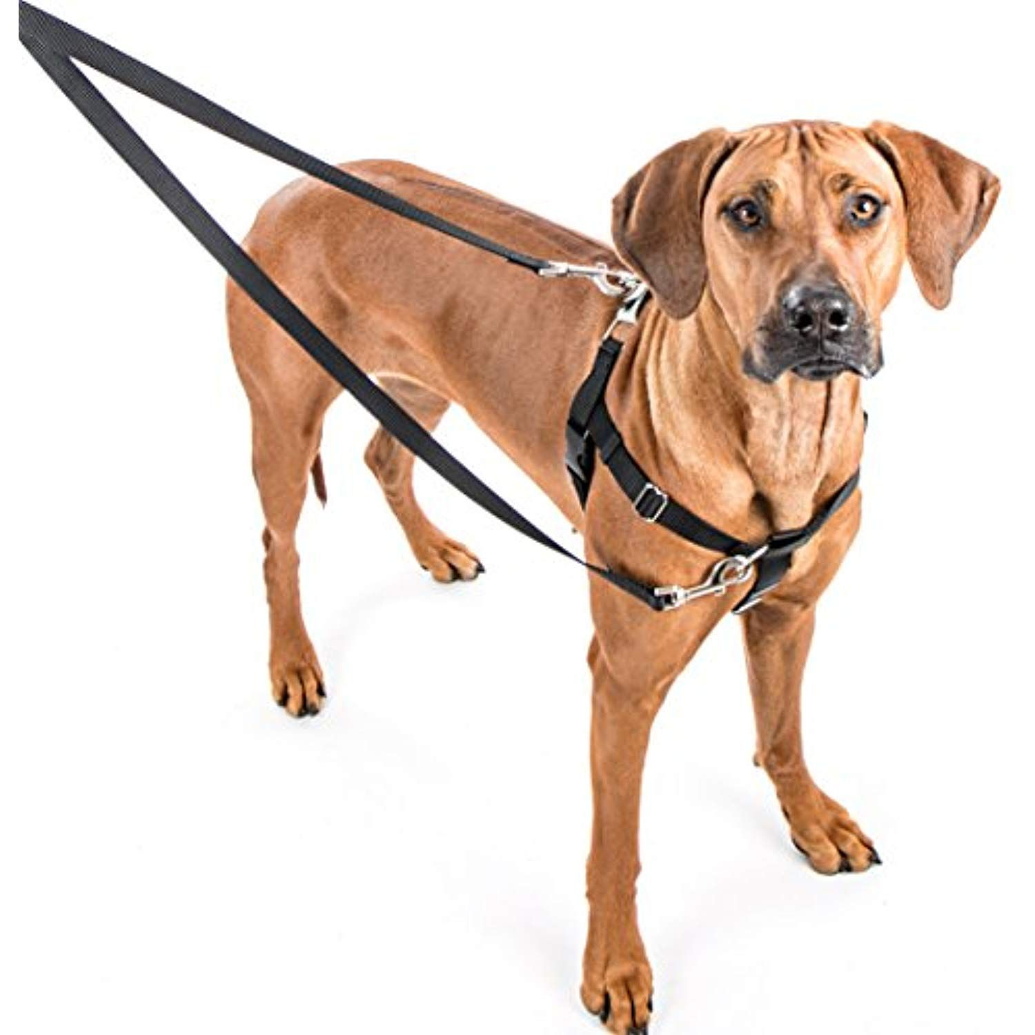 Freedom No Pull Dog Harness Training Package With Leash Teal
