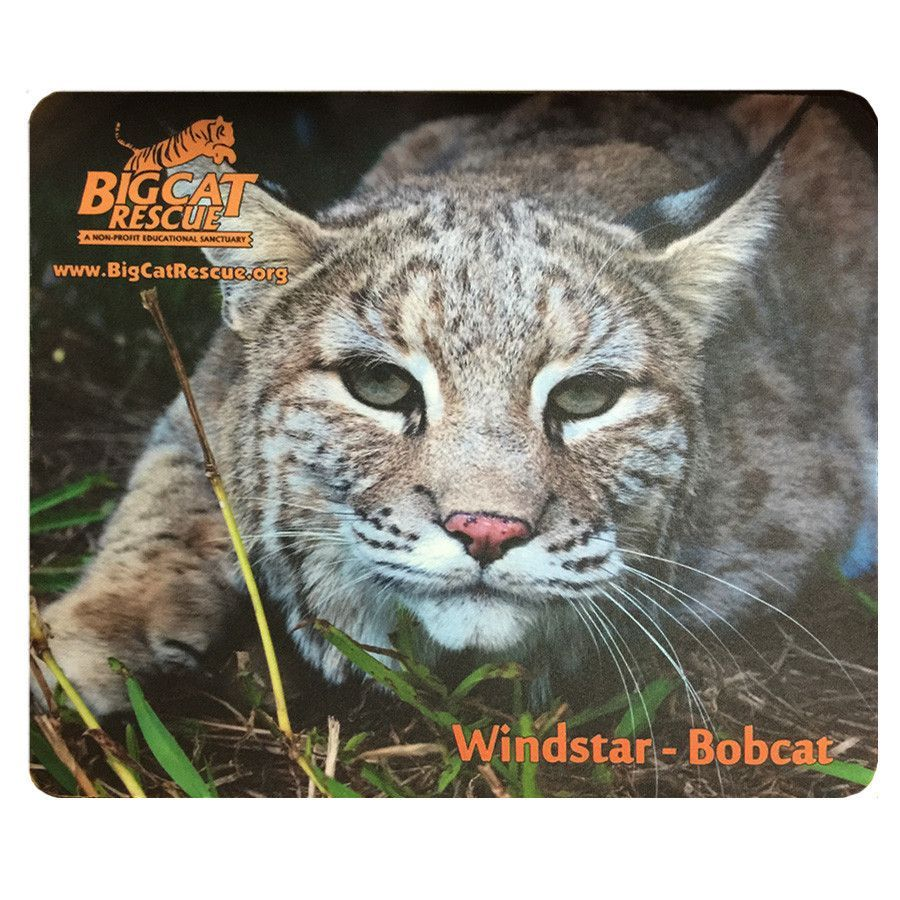 Mouse Pad - Bobcat Photo