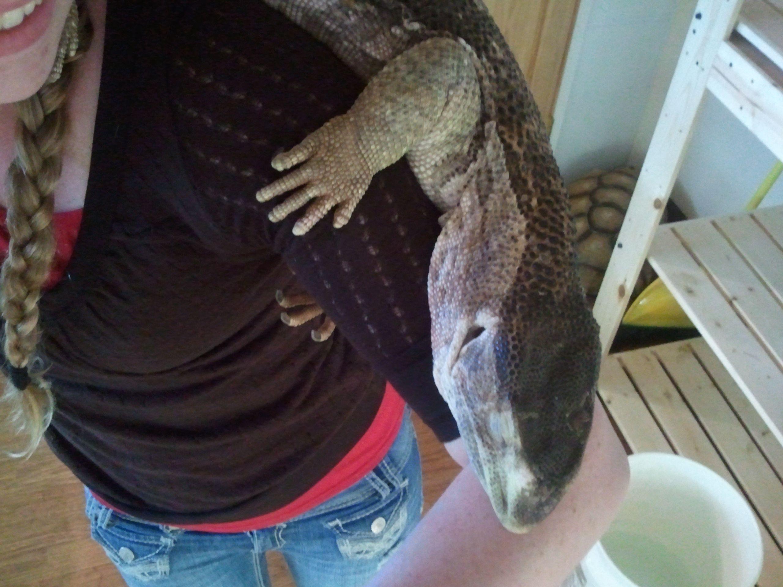 Big White Throat Monitor Lizard | Reptilians Do It Best ...