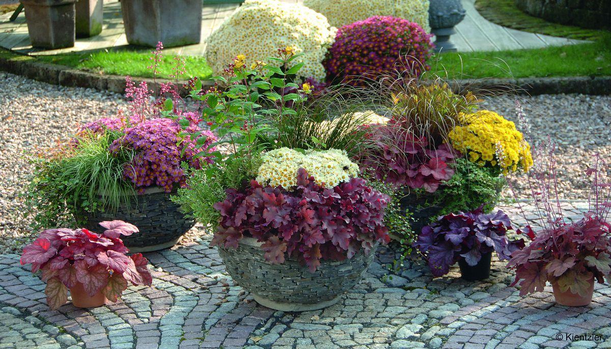 Herbst Pflanzen Garten