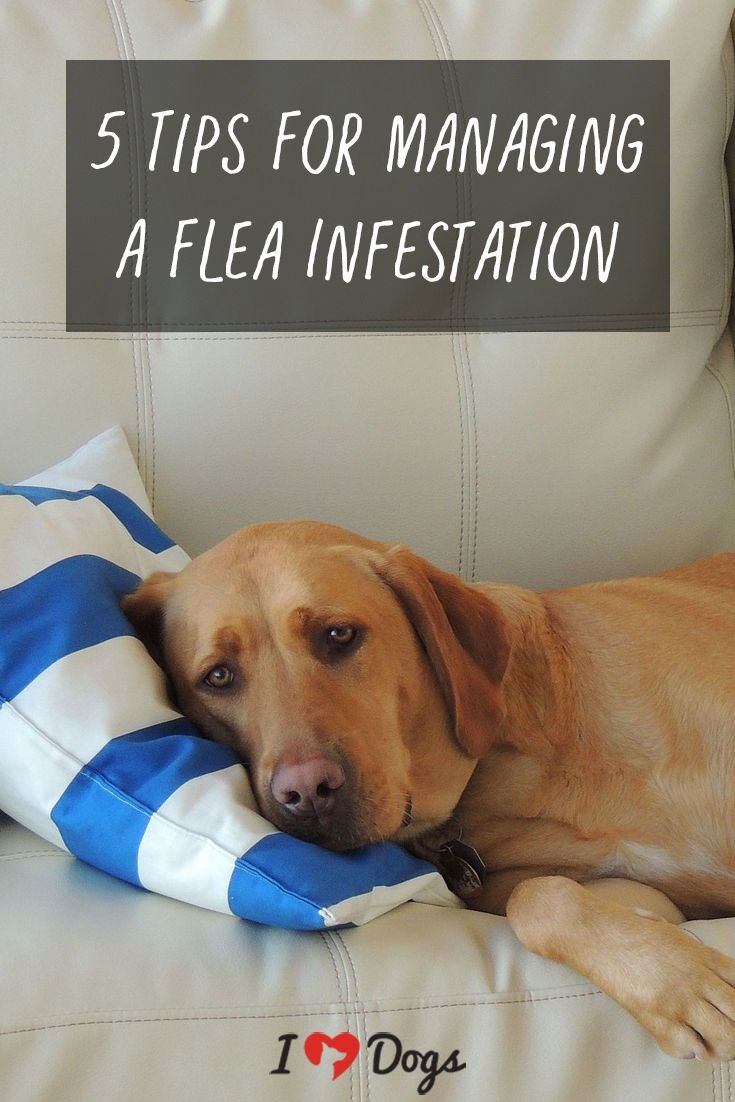 how to tell if dog has fleas or mites