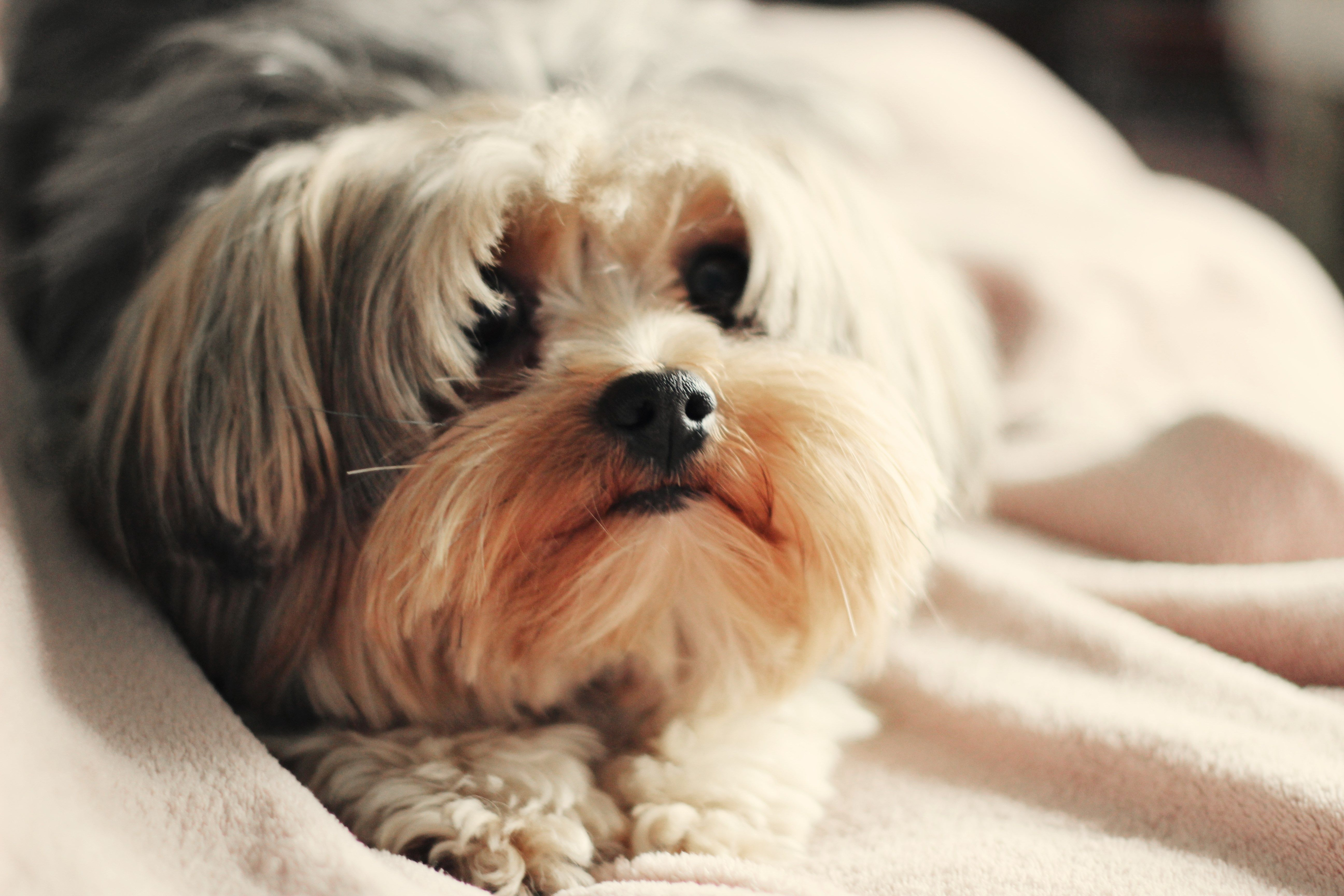 Dog wallpaper pictures free by steiner chester