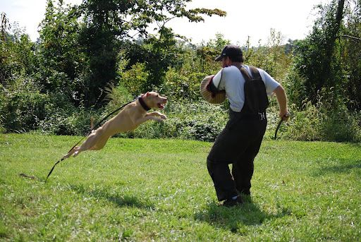 Guard Dog Training And The Best Guard Dogs Best Guard Dogs