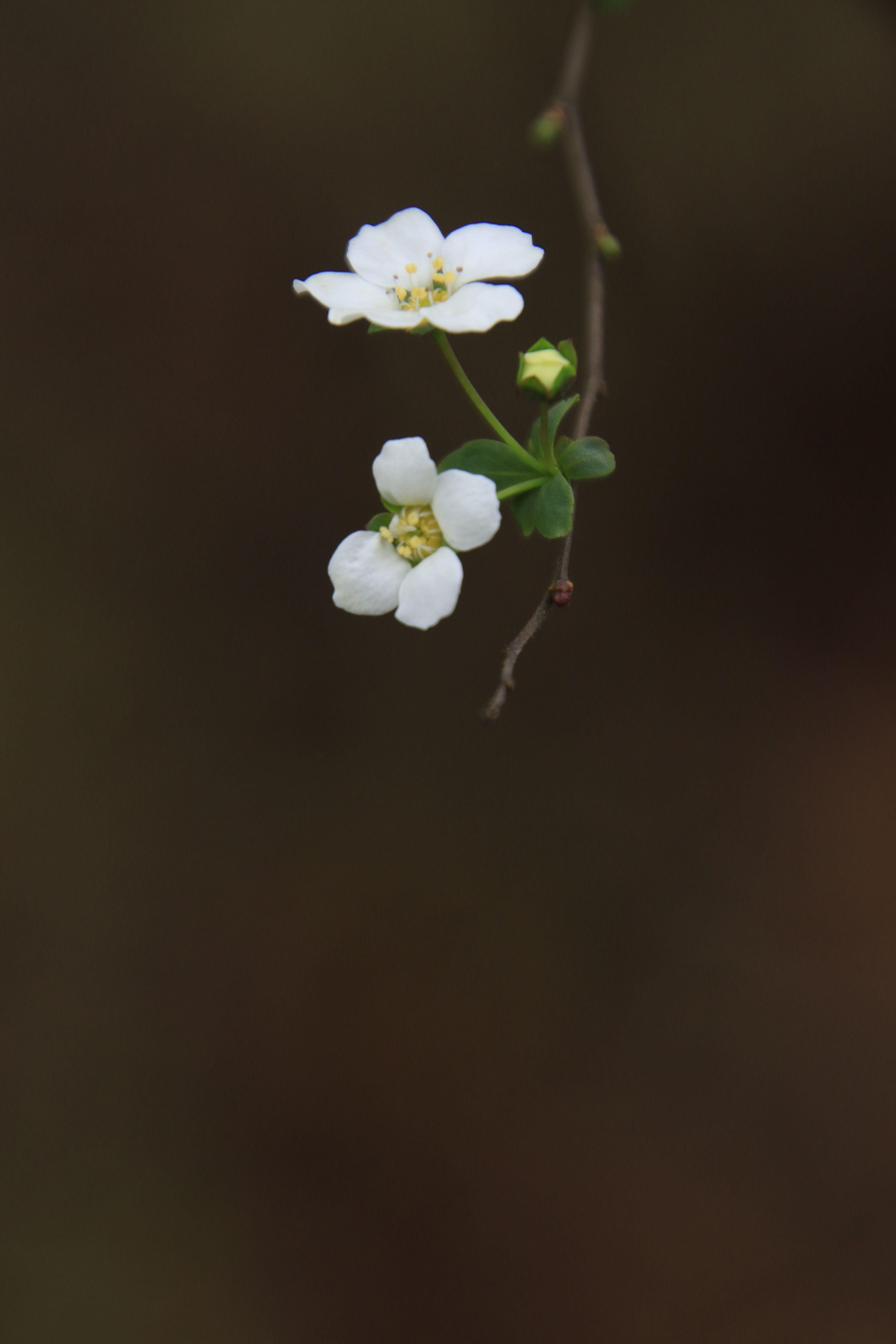 ありがたい ということを吟味していくとは ありがたくない 自分をしっかりみること 池田勇諦 Flowers Photography Trees To Plant Lucky Plant
