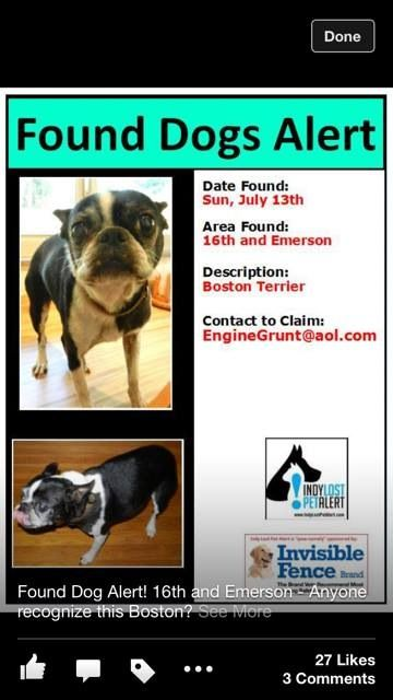 Found 7 13 13 Boston Terrier 16th And Emerson Indianapolis In Losing A Dog Boston Terrier Find Pets