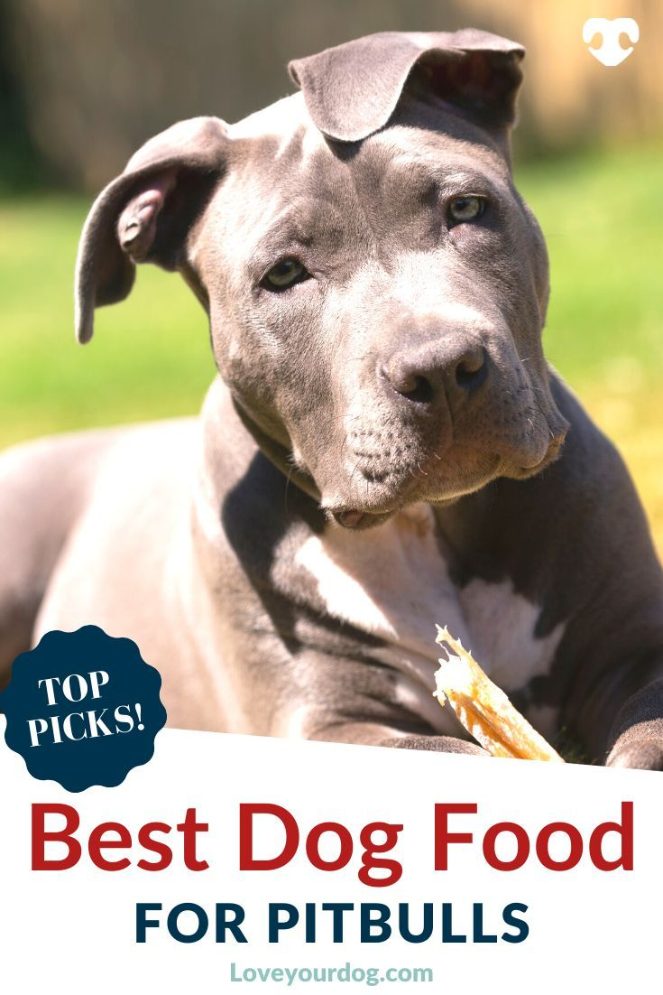 Best Dog Foods For Pitbull Terriers Puppies Adults Seniors
