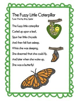 The Fuzzy Little Caterpillar